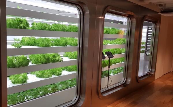 수경재배 방식으로 채소를 기르는 11층 'Farm'의 모습입니다. ⓒ트래블코드