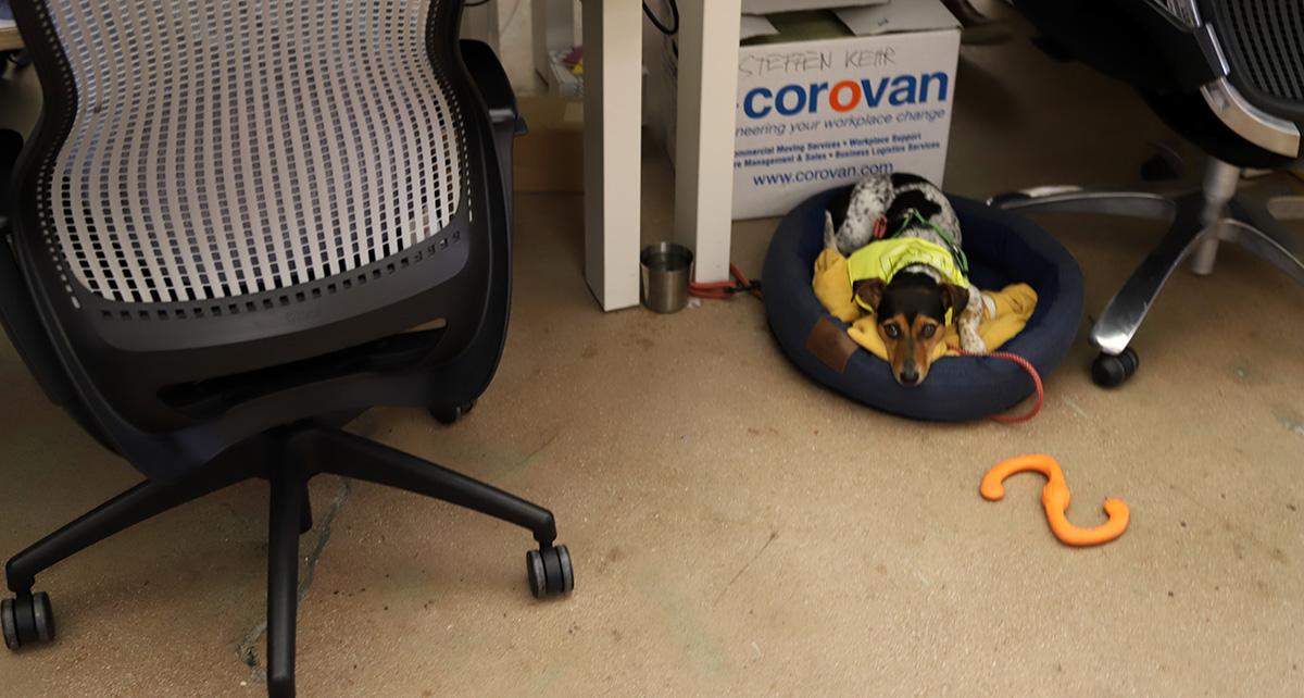 책상 아래 있는 강아지는 꽤 충격이었다. 훈련을 정말 잘 받은 듯하다. ©이은재