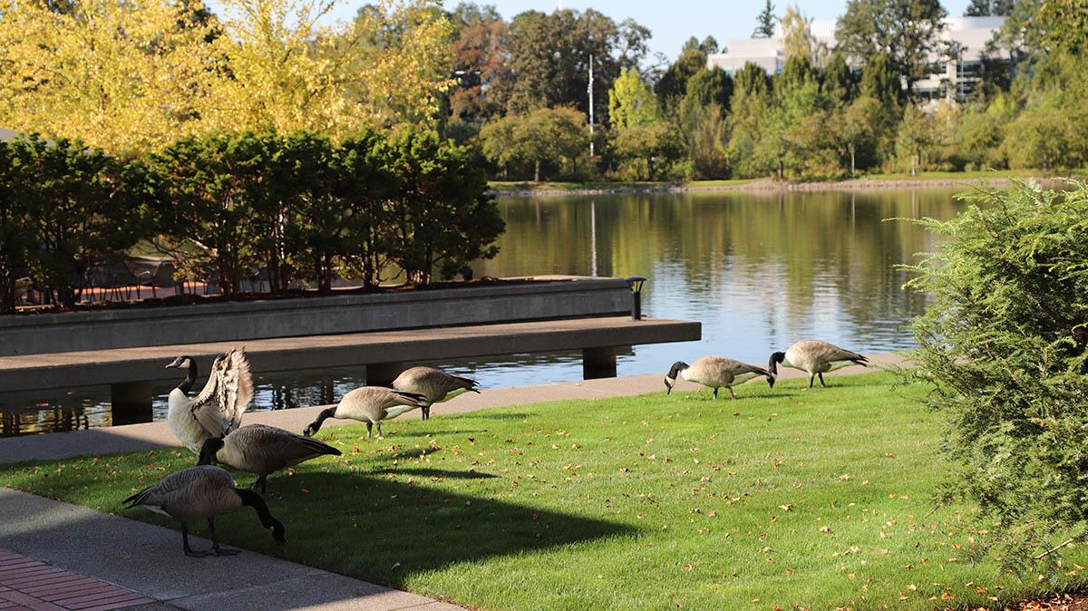 나이키 오피스는 철새가 지나가는 지역이라, 자주 새들이 출몰한다. ©이은재