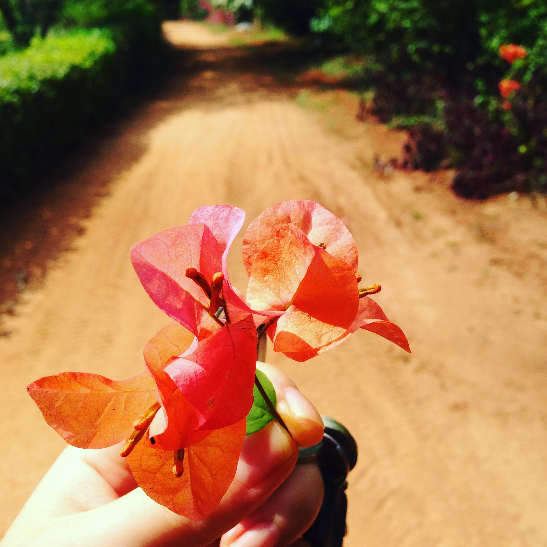 아름다운 꽃송이 ©김지수