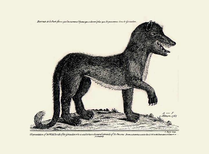 '제보당의 괴수'를 그린 18세기 프랑스의 삽화 (자료: Wikipidia)