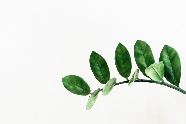 그린은 색보다는 환경보호와 친환경이란 의미와 연결된다. ⓒPaweł Czerwiński/Unsplash