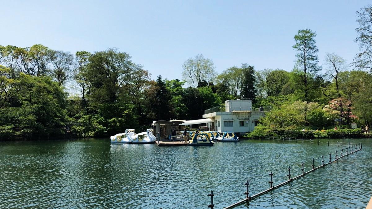 이노카시라 공원 ⓒ도쿄다반사